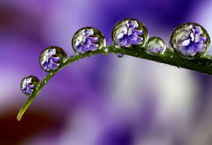 Dew Flowers Wallpapers