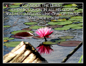 Pink Waterlily With Bible Quote From Matthew 6 Photograph