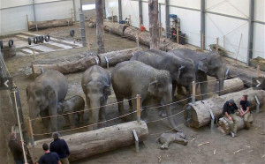 herd of elephants say goodbye to Lola the dead elephant calf at ...