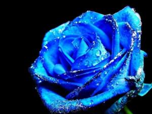 blue rose, blue rose, love, love, love poem, valentine, valentine love ...