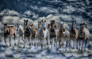 Running in Heaven referring to a quote that all horses go to heaven.