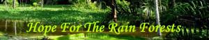Endangered Rainforest Plants Endangered rain forest plants