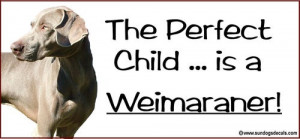 The Perfect Child Is A Weimaraner