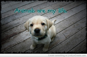 animals, cute, love, quote, quotes