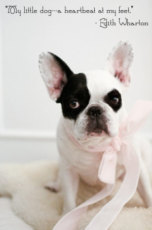 french bulldog with pretty pink ribbon and Edith Wharton quote ...