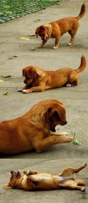 bichos , cachorro , dog , louva-a-deus , mantis