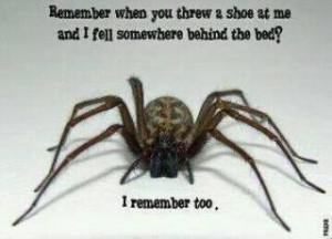 don't kill spiders.