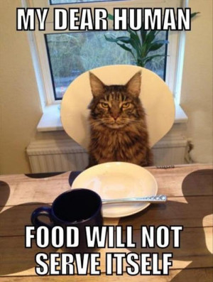 ... : Funny Pictures // Tags: Funny cat - my dear human // March, 2013