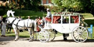 White Horse Wedding Carriage