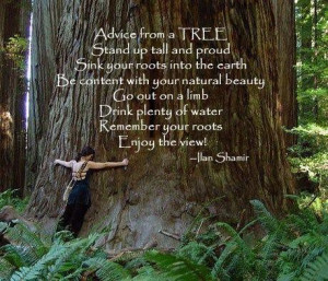 Advice from a TREE stand up tall and proud sink your roots into the ...