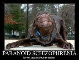 ... paranoid schizophrenia source http car memes com schizophrenia quotes
