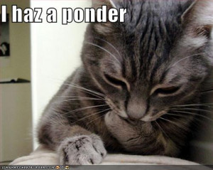 funny cats saying funny things funny animals saying funny funny cats ...