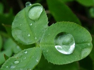 rain+drop,+song+of+the+rain,+literary+explanation,+great+quote+of+rain ...