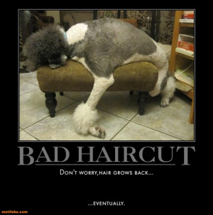 view full size more bad haircut demotivational poster tags poodles