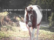 Horse Crazy Quotes - PAINTED PONY quote by JAMART Photography