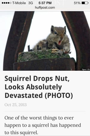 Squirrel Drops Nut, Looks Absolutely Devastated One of the worst ...