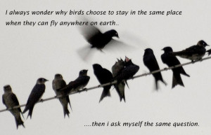 Always Wonder Why Birds Choose To Stay In The Same Place When They ...