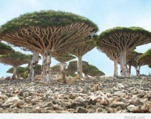Amazing Place – Socotra Island, Yemen