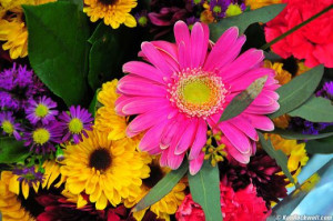 Types of Flowers and Florist Information