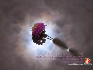 Sinhala Quotes About Love