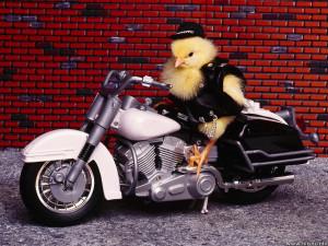bikerchick