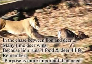 In the chase between lion and deer quote
