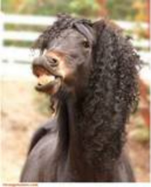 Th Funny Horse Hair Weave image