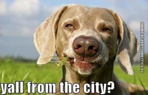 Funny Picture - Redneck dog