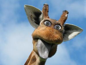 1920×1080-funny-giraffe-desktop-wallpapers-free-download-backgrounds