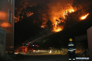 Firefighter Fighting Forest Fire