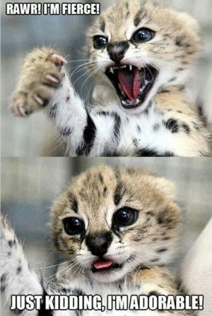 Funny animals with funny sayingsBig Cat, Funny Pics, Funny Animal ...