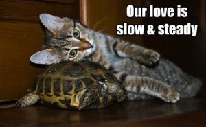 love_slow funny pictures