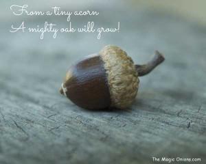 Inspiration - The Magic Onions