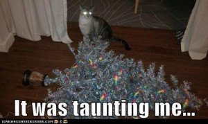 The Xmas tree had to die, says laser cat.