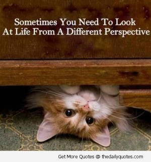 ... You Need To Look At Life From A Different Perspective. ~ Cat Quotes