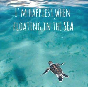 sea turtle, quotes