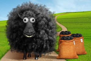 Baabaa Black Sheep