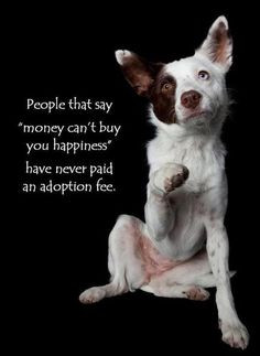 Animal Rescue Quotes