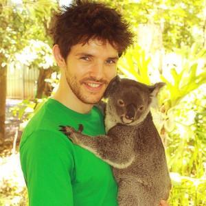 Colin Morgan and Koala (via Tumblr)