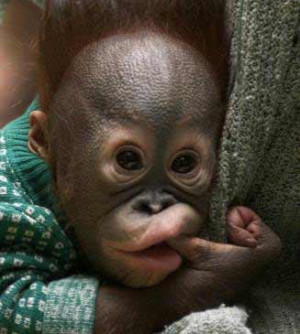 funny baby monkeys surprised