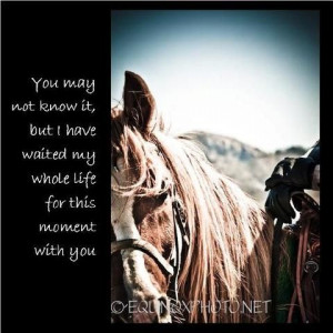 cool pics with horse quotes love