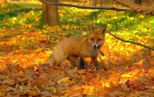 people, some animals love autumn and the bright foliage of the forest ...
