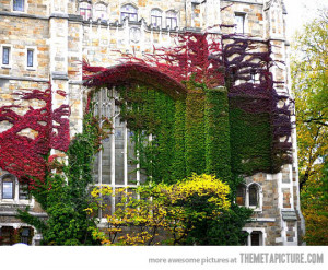 Funny photos funny building flowers colors