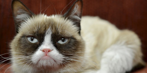 GRUMPY-CAT-facebook.jpg