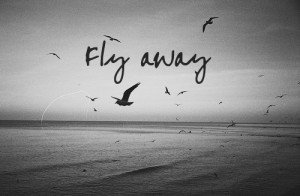 away, bird, black and white, fly, freedom, love, ocean, photography ...