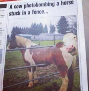 Return to Funny Photobombs – 45 Pics