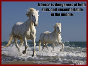 Horse Quotes Pictures Images Wallpapers Photos Page