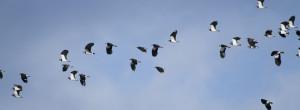 British Bird Species