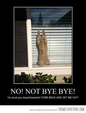 Funny photos funny kitten cat waving bye bye