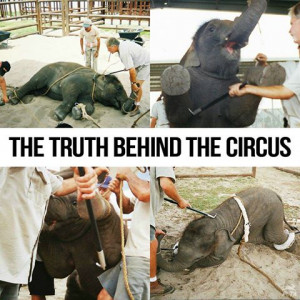 Truth Behind The Circus